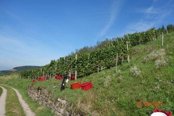 Weingut Forgeurac